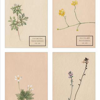 「花が、ある」〜春あつめ3〜