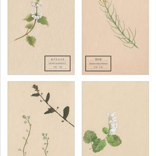 「花が、ある」〜春あつめ2〜