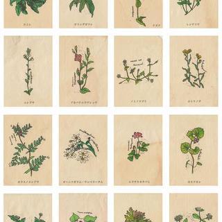 野の花図鑑colors2