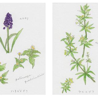 春の植物メモ2