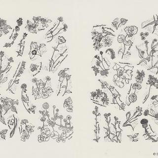 野の花図鑑2