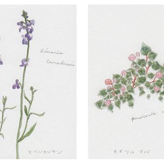 春の植物メモ3