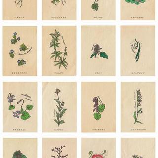 野の花図鑑colors3