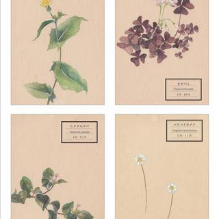 「花が、ある」〜春 - 秋〜