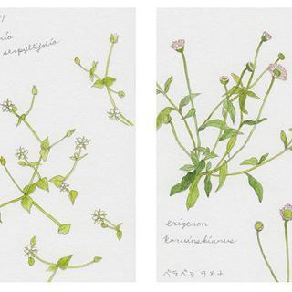 春の植物メモ4