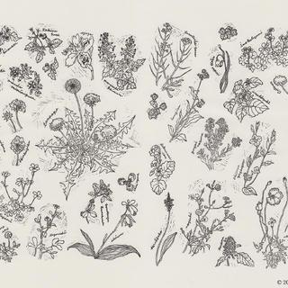 野の花図鑑3