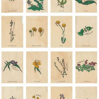 野の花図鑑colors5