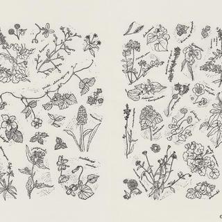 野の花図鑑4