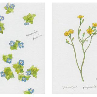 春の植物メモ1