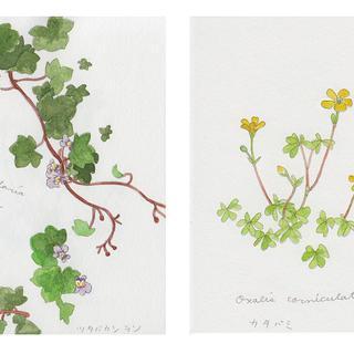 春の植物メモ5