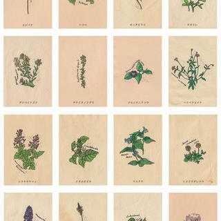 野の花図鑑colors6