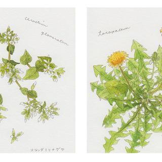 春の植物メモ6