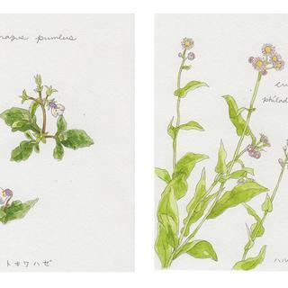 春の植物メモ7
