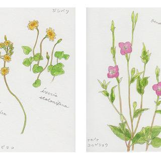 春の植物メモ8