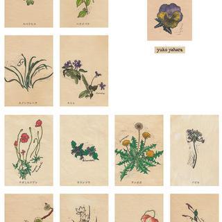 野の花図鑑colors1