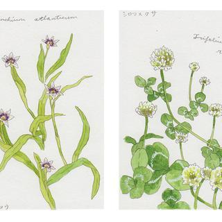 春の植物メモ9