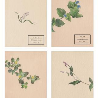 「花が、ある」〜夏 - 秋〜