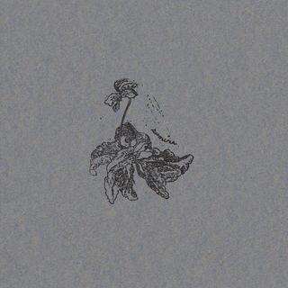 野の花図鑑 〜スミレ〜